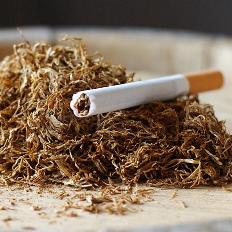 Сигареты в которых настоящий табак купить в москве недорого 200 сигарет онлайн в хорошем качестве
